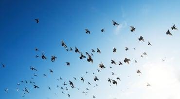 flock of birds.jpg